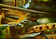 Abstracted Photos - Rust Abstraction by Odd Jeppesen