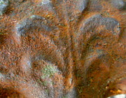Headboard Photo Posters - Rust on a Headboard Poster by K Marie