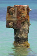 Metal Pier Prints - Rusted Dock Pier of the Caribbean IV Print by David Letts