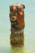 Corrode Posters - Rusted Dock Pier of the Caribbean VII Poster by David Letts
