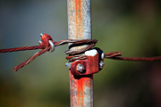 Metal Pole Photos - Rusted Fence Post 2 by Lon Casler Bixby