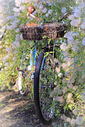 Rustic Bicycle Print by Athena Mckinzie