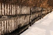 White Picket Fence Framed Prints - Rustic Fence in Winter Framed Print by Don Schroder