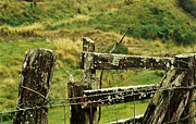 Barbed Wire Fences Framed Prints - Rustic Fence Framed Print by Marilyn Wilson
