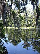 Forida Framed Prints - Rustic Florida River Shadows Framed Print by Warren Thompson