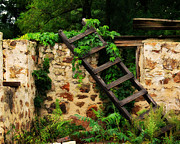 Old Barns Prints - Rustic Ladder Print by Perry Webster