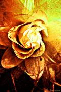 Jill Tennison - Rustic Rose