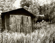 Gass Framed Prints - Rustic Shed Framed Print by Perry Webster