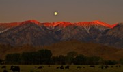 Ranch Prints - Rustlers Moon Ranchers Sunrise Print by Gus McCrea