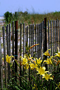 Beach Fence Prints - Rusty And New Print by Skip Willits