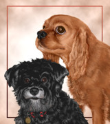 Cute Schnauzer Digital Art - Rusty and Shadow by Matt Upholz