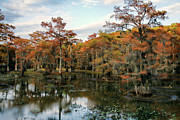 Cypress Trees Photos - Rusty Mill by Lana Trussell
