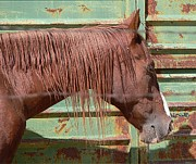 Horse Barn Photos - Rusty by Robert Hooper