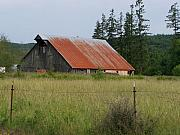 Red Roof Pyrography - Rusty Roofed Barn    Washington State by Laurie Kidd