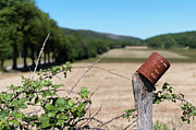Diminishing Perspective Prints - Rusty Tin Can Laid On Fence And Fields Print by Gil Guelfucci