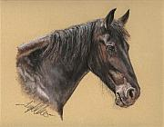 Friesian Horse Framed Prints - Rutger Framed Print by Terry Kirkland Cook