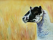 Nature Study Paintings - Rutland Sheep  by Lucy Deane
