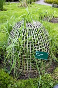 Cloche Posters - Rye Grass In Basket Cloche Poster by Mark Williamson