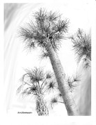 Sabal Palm Trees Prints - Sabal Cabbage Palm Print by Jim Hubbard