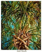 Sabal Framed Prints - Sabal Palmetto Framed Print by Eddie Glass