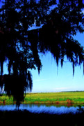 Acadian. Acadiana Framed Prints - Sabine National Wildlife Refuge along the Creole Nature Trail Framed Print by Thomas R Fletcher