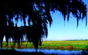 Sabine National Wildlife Refuge Print by Thomas R Fletcher