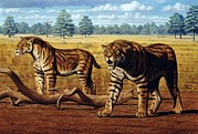 Threatening Prints - Sabre-toothed Cats, Artwork Print by Mauricio Anton