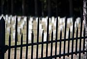 Bayonet Photos - Sackets Harbor Military Cemetery by Fred Lassmann