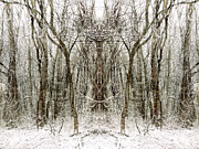 Unity Digital Art Posters - Sacred Forest Poster by Lynzi Wildheart