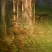 Abstract - Sacred Grove by Margaret Denny