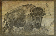 American Bison Drawings Prints - Sacred Old  Print by Teresa Vecere