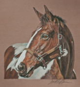 Equine Pastels Framed Prints - Sacusca Framed Print by Terry Kirkland Cook