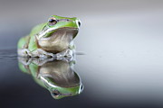 Amphibians Photo Posters - Sad Green Frog Poster by Darren Iz Photography