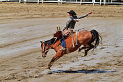 Stampede Prints - Saddle bronc riding at the Calgary Stampede Print by Louise Heusinkveld