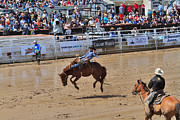 Saddle Metal Prints - Saddle bronc riding event at the Calgary Stampede Metal Print by Louise Heusinkveld
