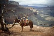 Water And Plants Art - Saddled Mule And Scenic View by David Edwards