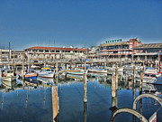 Fishermans Wharf Prints - Safe Haven for Yachts Print by Douglas Barnard