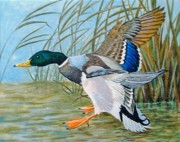 Ducks Paintings - Safe Landing by Herb Strobino