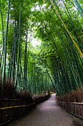 Road Travel Framed Prints - Sagano Bamboo Forest Framed Print by Shenghung Lin Photos