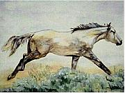 Quarter Horse Framed Prints - Sage Runner Framed Print by Debra Sandstrom