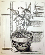 Potted Drawings Metal Prints - Sage Metal Print by Shelley Bain