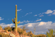 Symbol Posters - Saguaro cactus - Symbol of the American West Poster by Christine Till