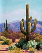 Mountains Pastels Framed Prints - Saguaro Framed Print by Candy Mayer