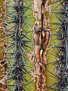 2hivelys Art Photos - Saguaro  by Methune Hively