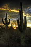 Monsoon Framed Prints - Saguaro Sunset  Framed Print by Saija  Lehtonen