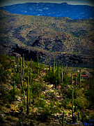 Rincon Photos - Saguaro Views to Rincon Peaks by Aaron Burrows