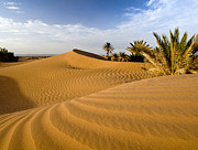 Sahara Sunlight Prints - Sahara Desert At Mhamid, Morocco, Africa Print by Ben Pipe Photography
