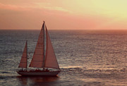 Sunset Sailing Prints - Sail Away Print by Maria Arango