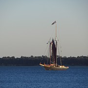 Sc Prints - Sailboat at Charleston Battery 2 Print by Cathy Lindsey