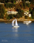 Sailboat Ocean Posters - Sailboat in Vancouver Poster by Robert Meanor